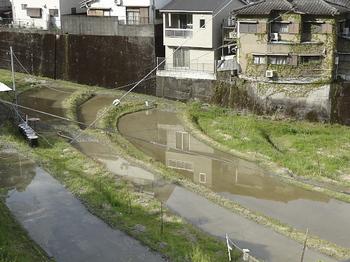 下の田んぼ.jpg