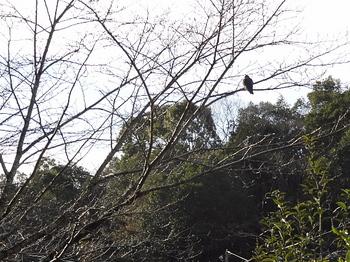 鳥一羽.jpg
